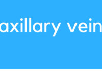 Medical Definition of Axillary vein