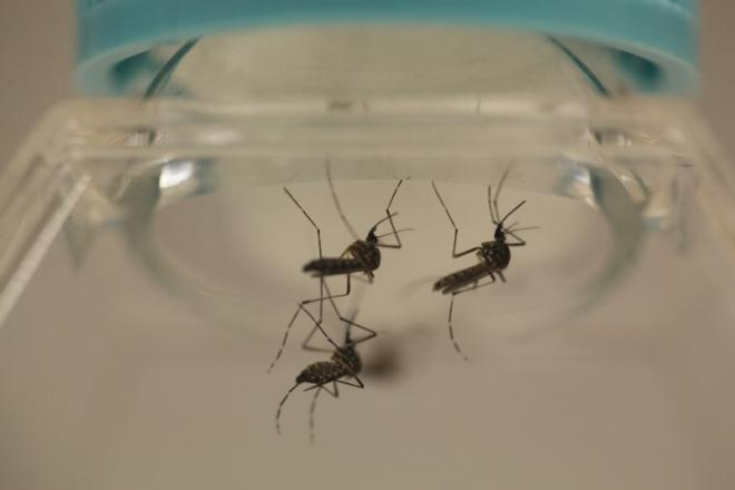 Florida Reports Evidence Of Local Zika Transmission