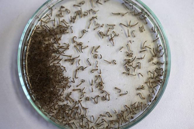 Zika Virus: Where Did It Come From And How Did It Spread?