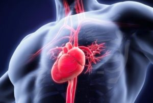 The heart consists of two ventricles and two atria. Tachycardia occurs when these beat too fast.