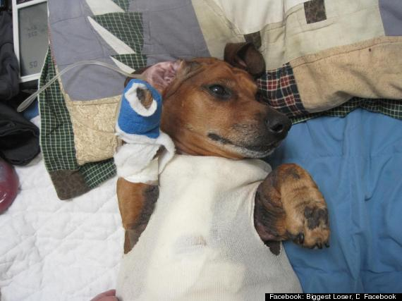 Hot Dog! Obie, Formerly Obese Dachsund, Undergoes Tummy Tuck to Tighten Skin [VIDEO]